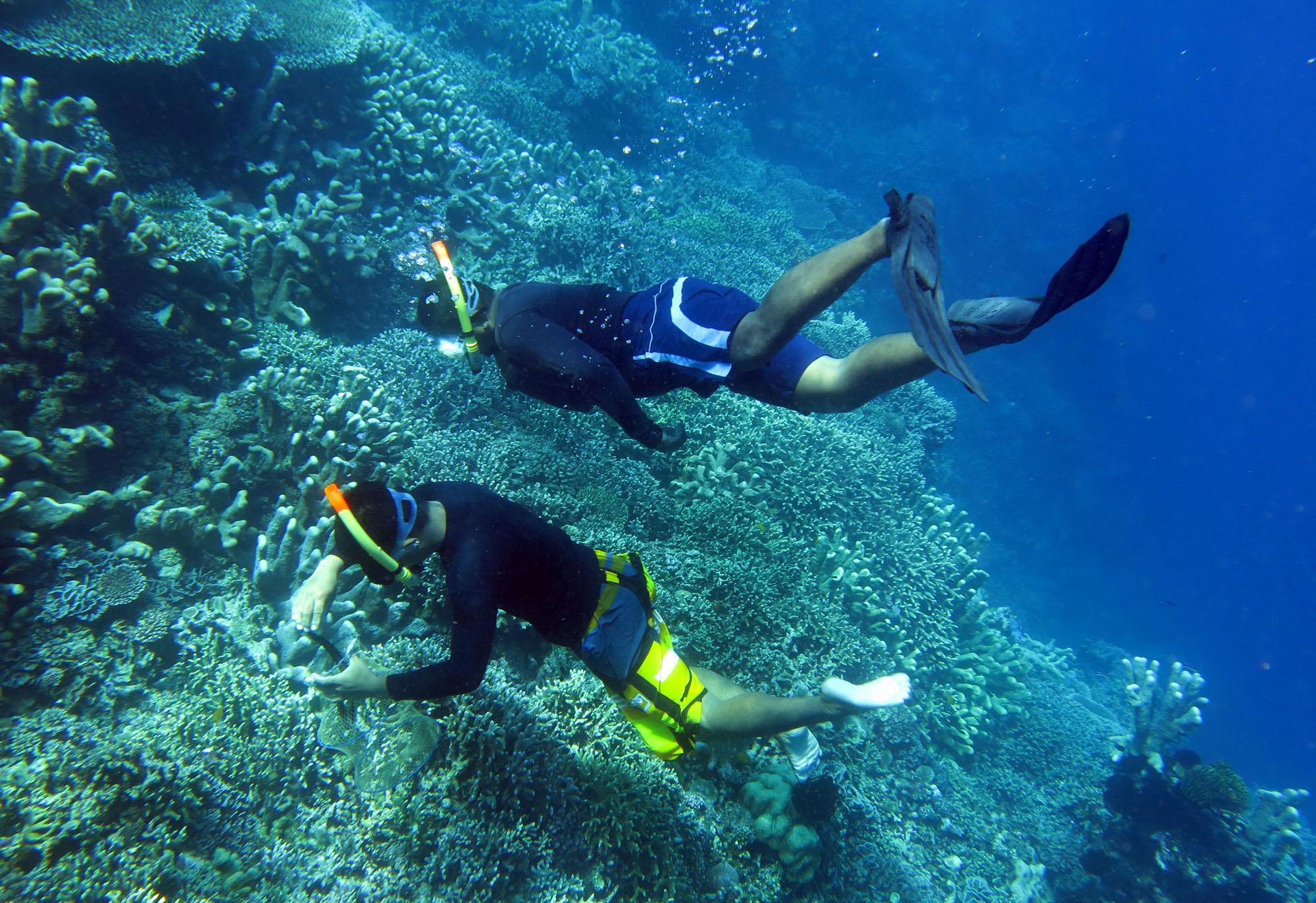 Warga Menyelam Mengambil Sampah Terumbu Karang Taman Laut Olele Kabupaten