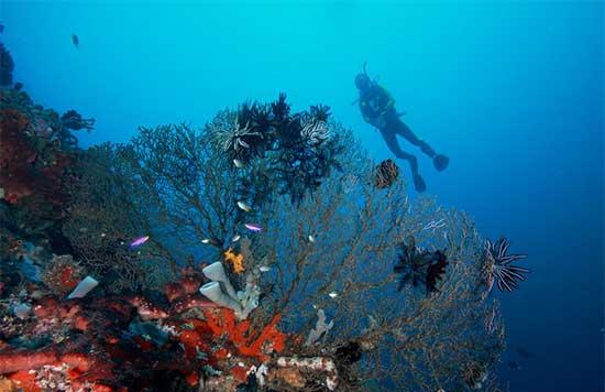 Wisata Gorontalo Keindahan Alam Bawah Air Taman Laut Olele Menyelami