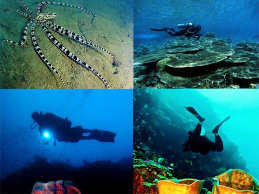 Wisata Gorontalo Keindahan Pantai Olele Taman Laut Kab Bone Bolango