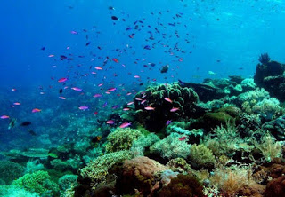 Wisata Gorontalo Keindahan Pantai Olele Taman Laut Menyimpan Diantaranya Terdapat