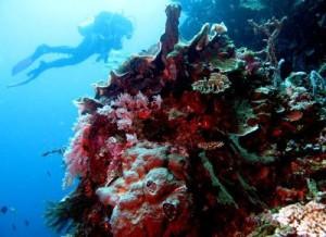 Wisata Gorontalo Rekan Taman Laut Olele Terletak Desa Kecamatan Kabila
