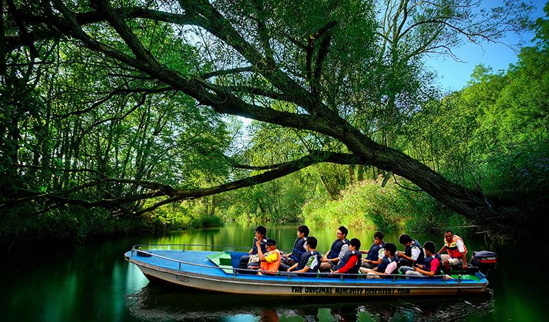 8 Wisata Pulau Bintan Kamu Kunjungi Sensasi Menjelajah Hutan Mangrove