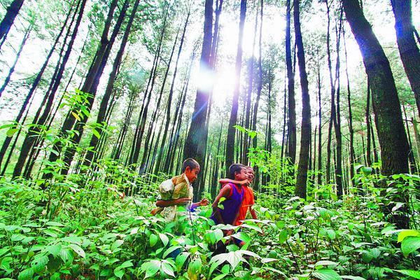 East Kalimantan Projects Development Excluding Balikpapan Bunyu Tribun Kaltim Status