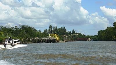 Jongfajar Kelana Gambar Hutan Mangrove Pulau Bunyu Kab Bulungan