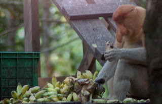 Kota Risky1606 Blog Kawasan Konservasi Hutan Mangrove Ide Walikota Tarakan