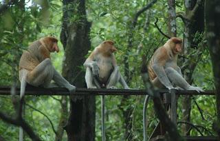 Kota Risky1606 Blog Sumber Http Diponegorojaya Blogspot 2010 06 Hutan