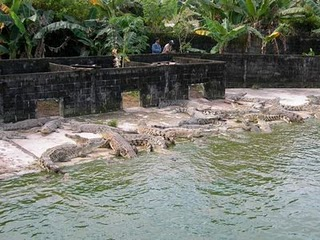 Kota Tarakan Wikiwand Penangkaran Buaya Hutan Mangrove Pulau Bunyu Kab