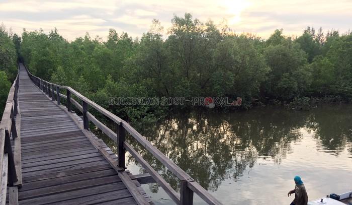 Masyarakat Mulai Sadar Pentingnya Mangrove Bulungan Post Jaga Keseimbangan Alam