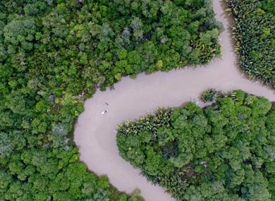 Sayap Kehidupan Pulau Bunyu Burung Nusantara Birds Indonesia Hutan Mangrove