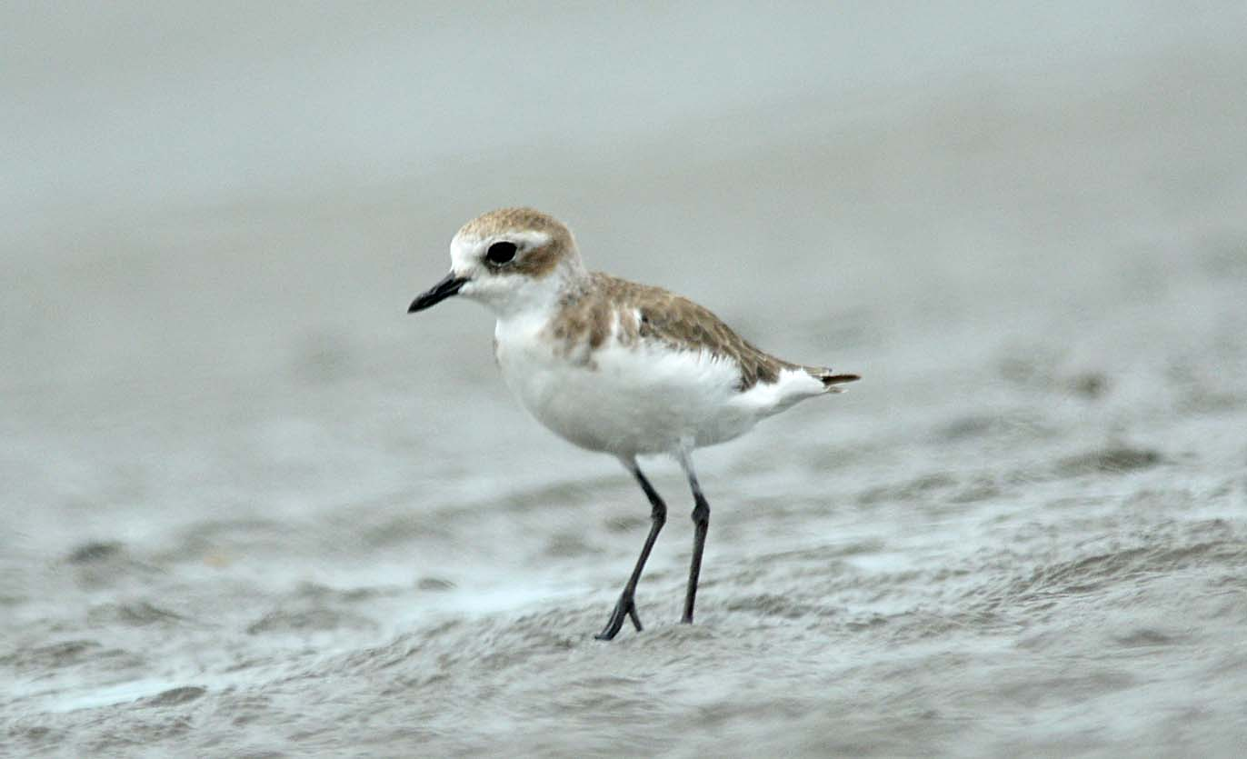 Sayap Kehidupan Pulau Bunyu Burung Nusantara Birds Jenis Lainnya Ternyata