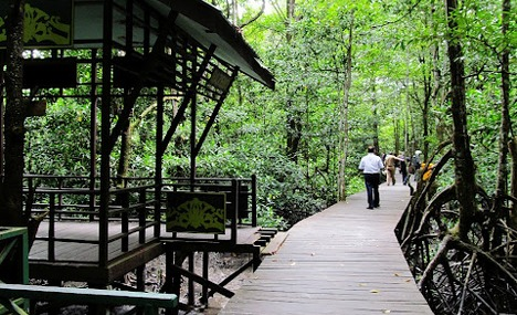 Seputar Tarakan Capek Berkeliling Tempat Istirahatnya Kog Hutan Mangrove Pulau