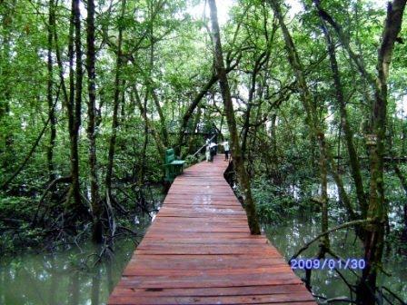 Seputar Tarakan Menapaki Disini Terasa Nyaman Loh Adeem Hutan Mangrove