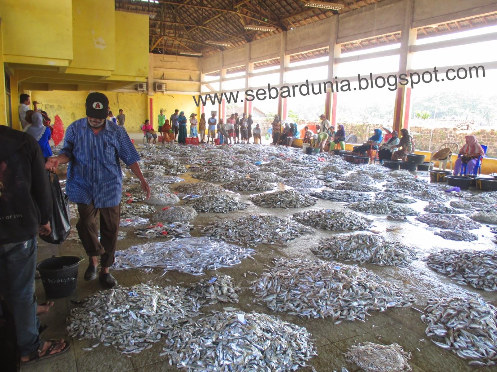 2014 Fotopedia Aktifitas Pelelangan Ikan Tpi Tawang Pantai Kab Bulungan