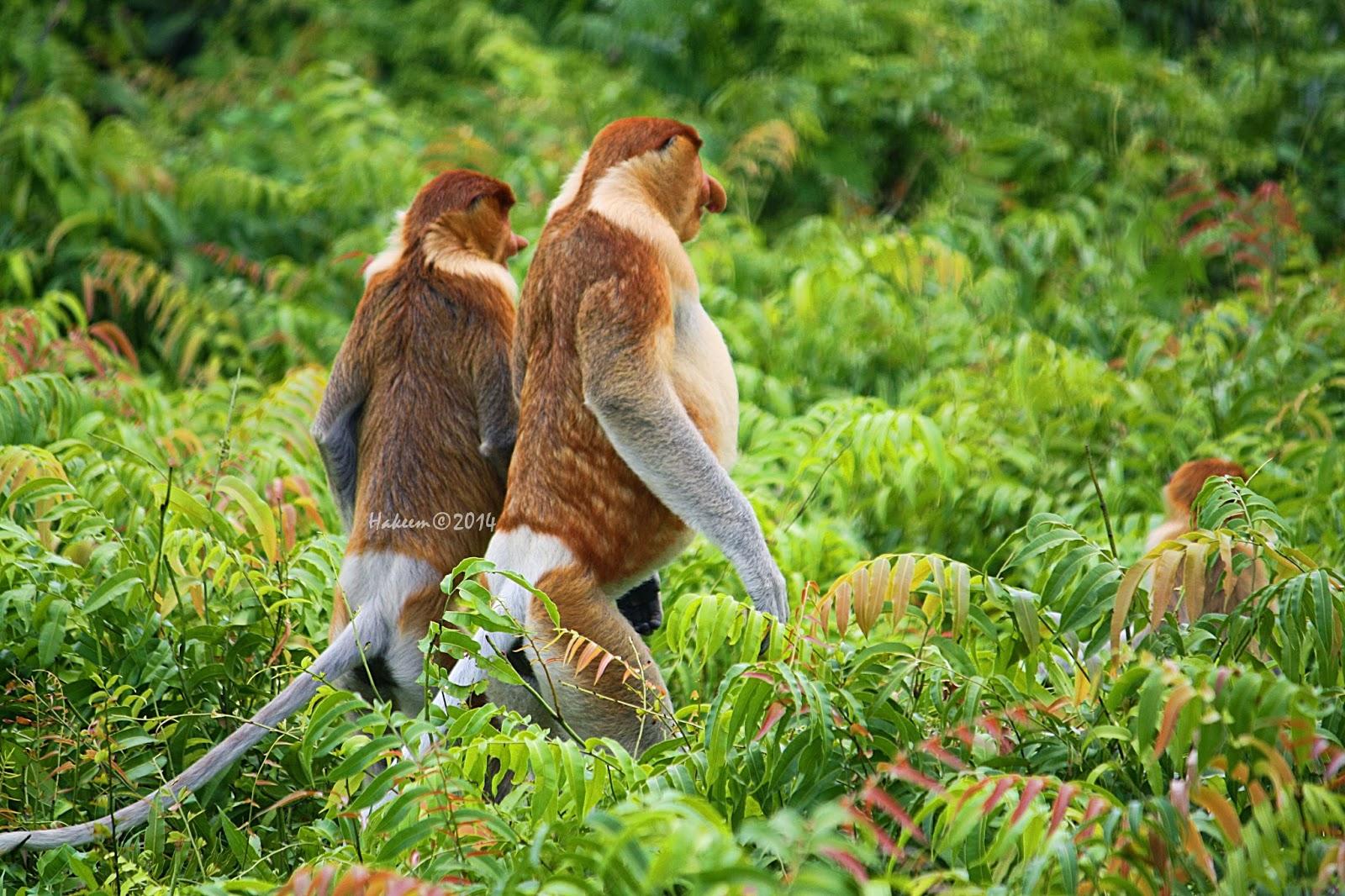 107 Tempat Wisata Kalimantan Utara Menarik Wajib Dikunjungi Id Pura