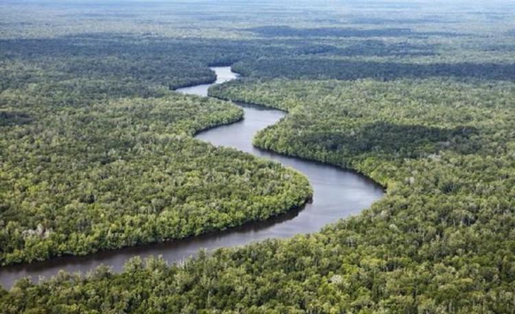 51 Daftar Taman Nasional Indonesia Beserta Lokasinya Sembilang Cendrawasih Kab