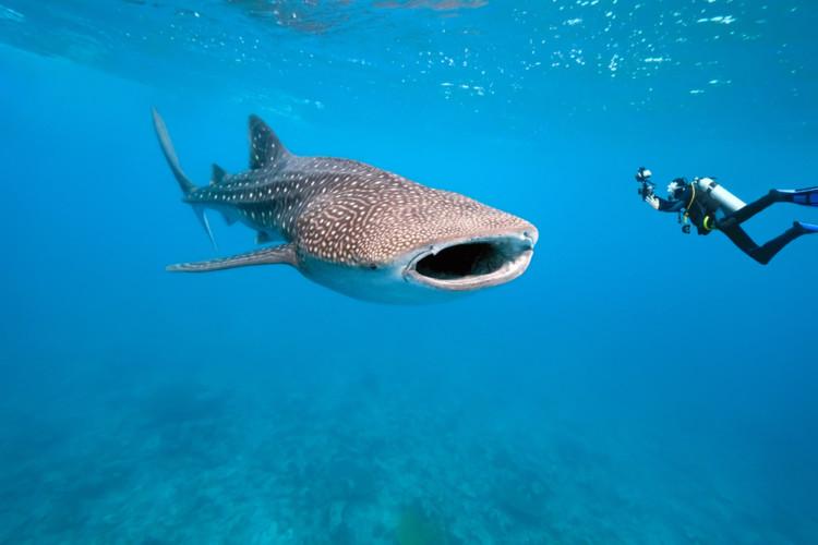 51 Daftar Taman Nasional Indonesia Beserta Lokasinya Teluk Cendrawasih Kab