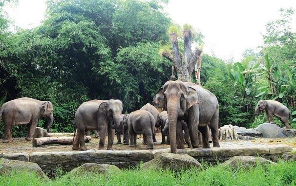 Melestarikan Ekosistem Keanekaragaman Hayati Stop Gl Eksploitasi Taman Cendrawasih Kab