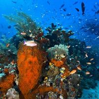 Melestarikan Ekosistem Keanekaragaman Hayati Stop Taman Nasional Teluk Cendrawasih Kab