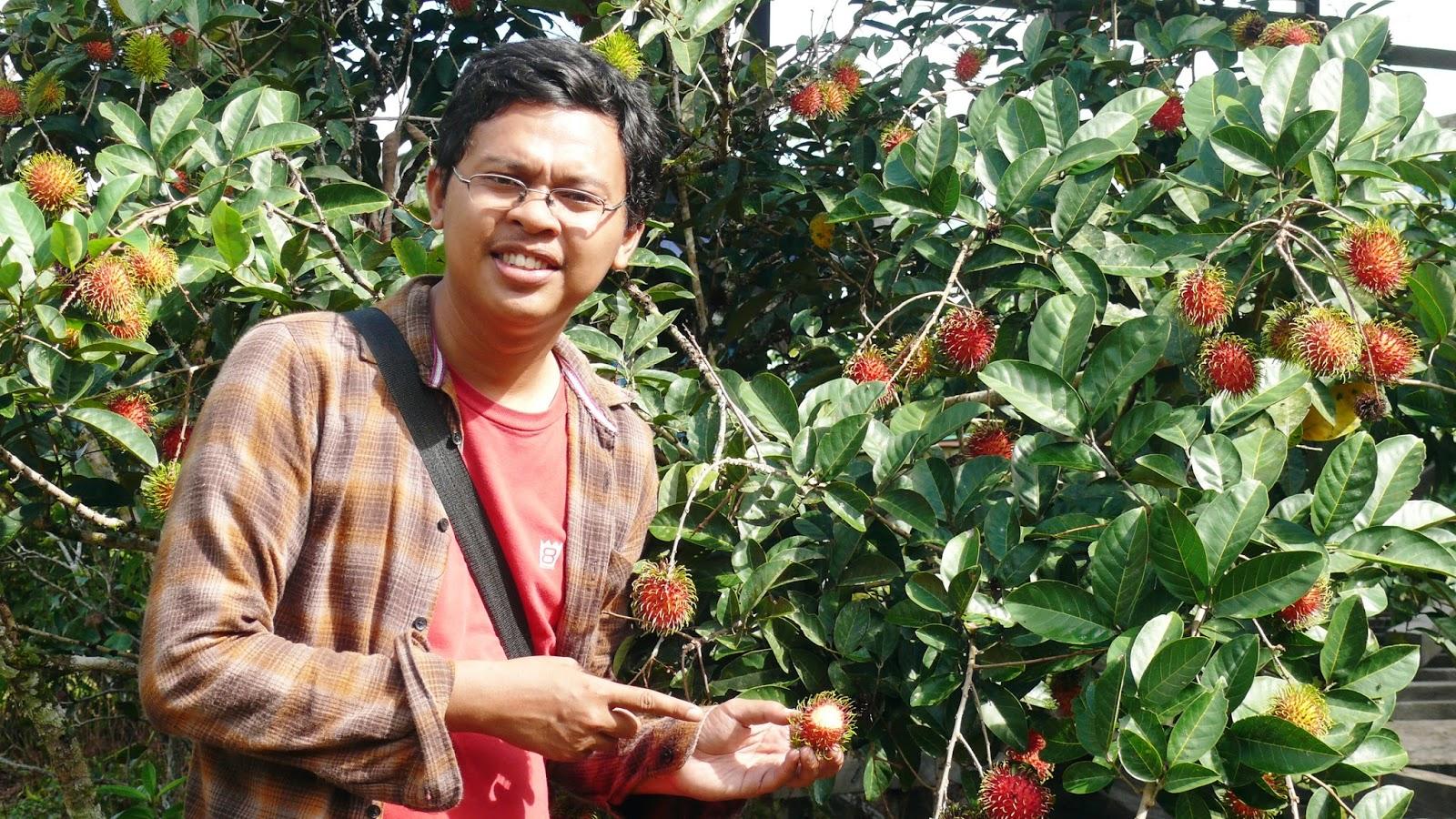 Selimau Kalimantan Utara Pohon Rambutan Perkampungan Kelurahan Tanjung Selor Timur