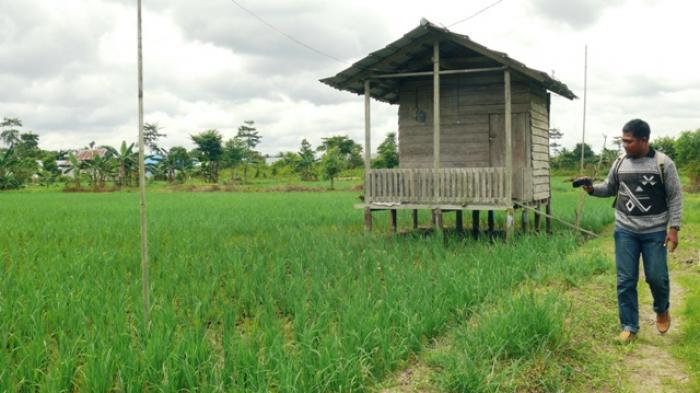 Traktor Bantuan Dikenakan Retribusi Tak Memonopoli Taman Selimau Kab Bulungan