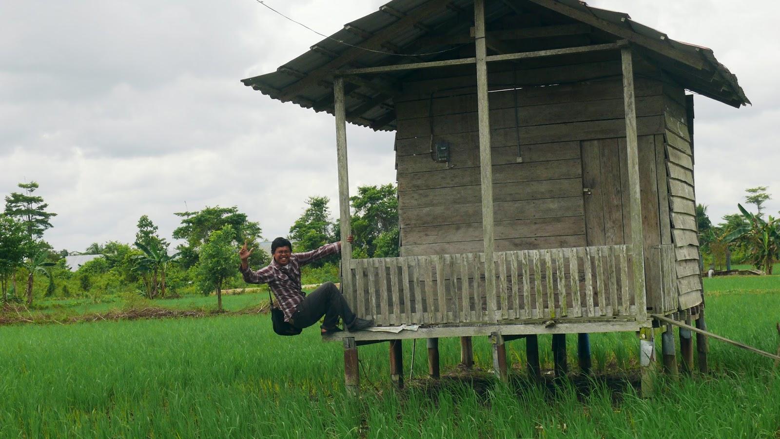 Traktor Desa Bulungan Berada Tengah Persawahan Padi Selimau Tiga Kelurahan