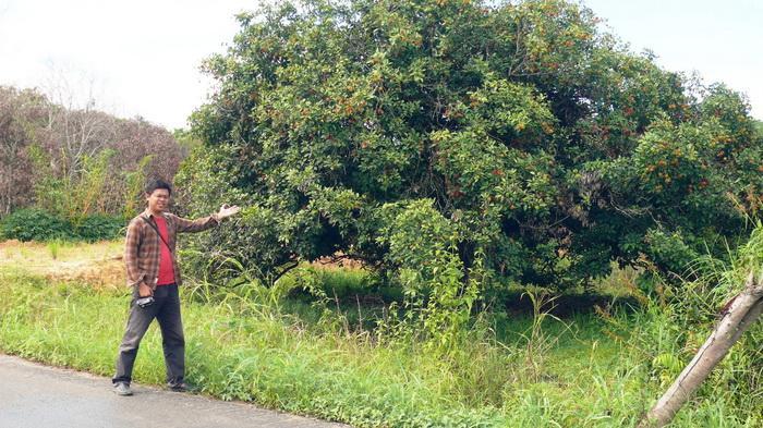 Wisata Selimau Satu Serpihan Surga Buah Rambutan Tribun Kaltim Taman
