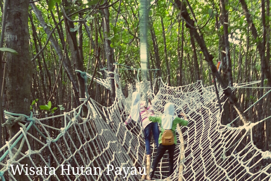 25 Objek Wisata Kabupaten Cilacap Jawa Tengah Terpopuler Jelajah Hutan