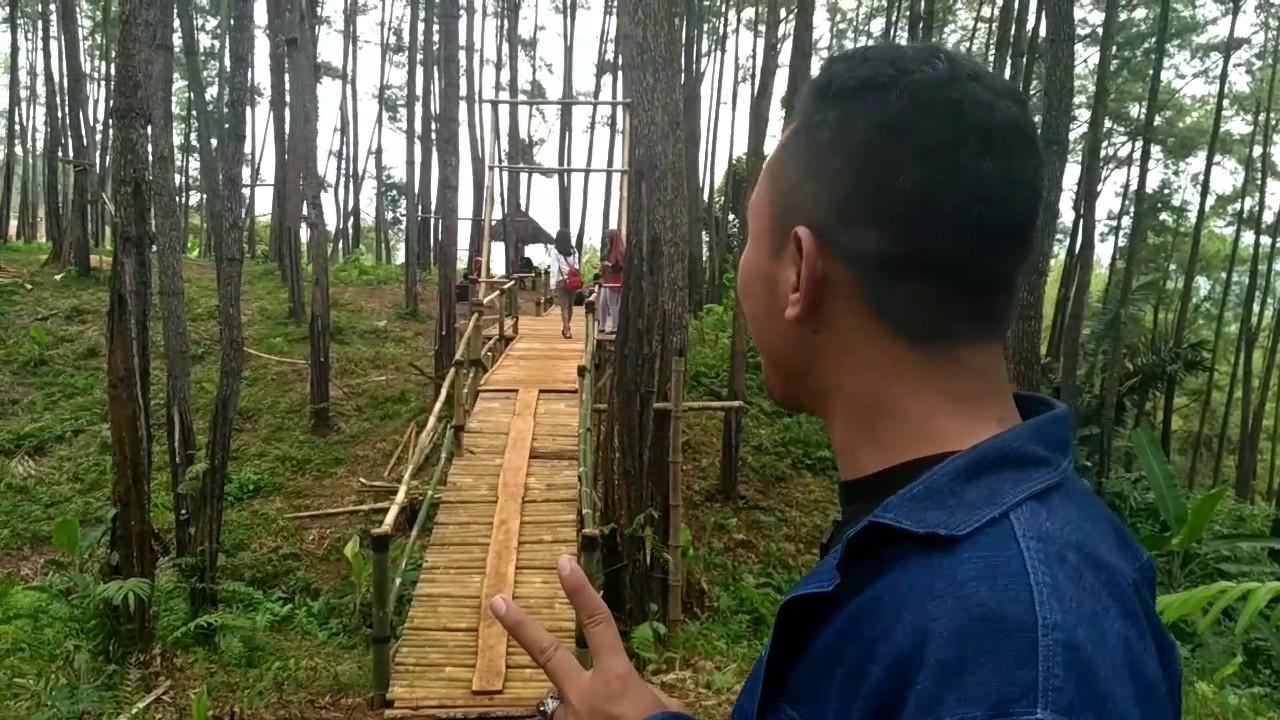 Hotsxxx Kemit Forest Sidareja Jateng Youtube Hutan Kermit Karanggedang Kab