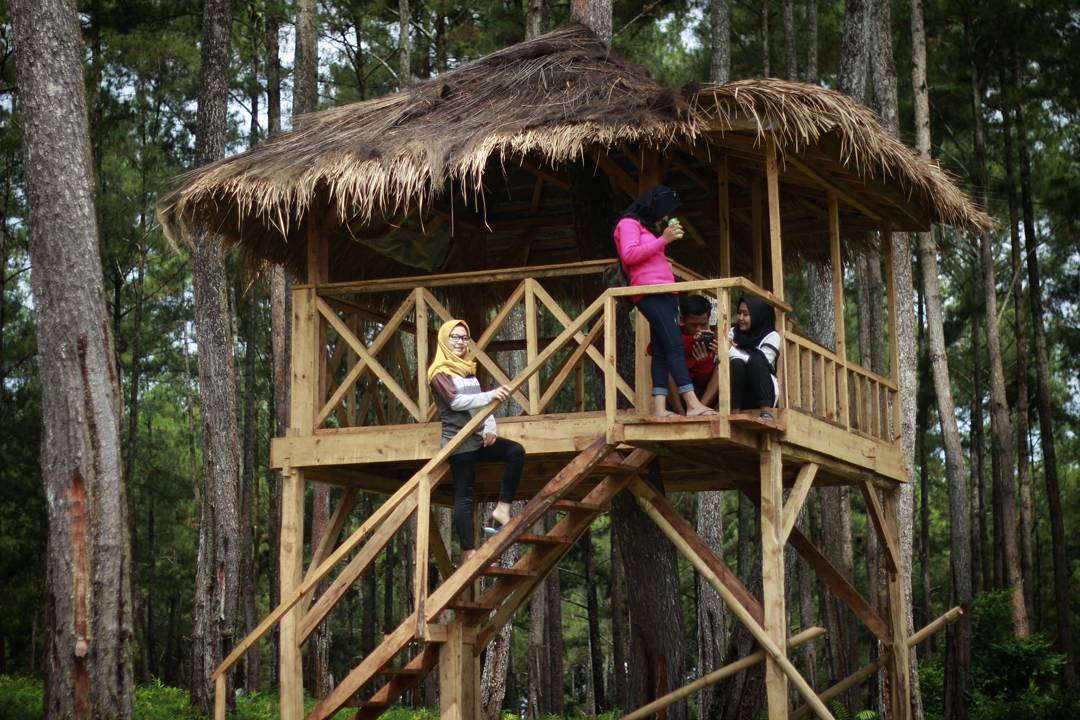 Hutan Kemit Cilacap Wisata Instagenic Banget Kermit Karanggedang Kab