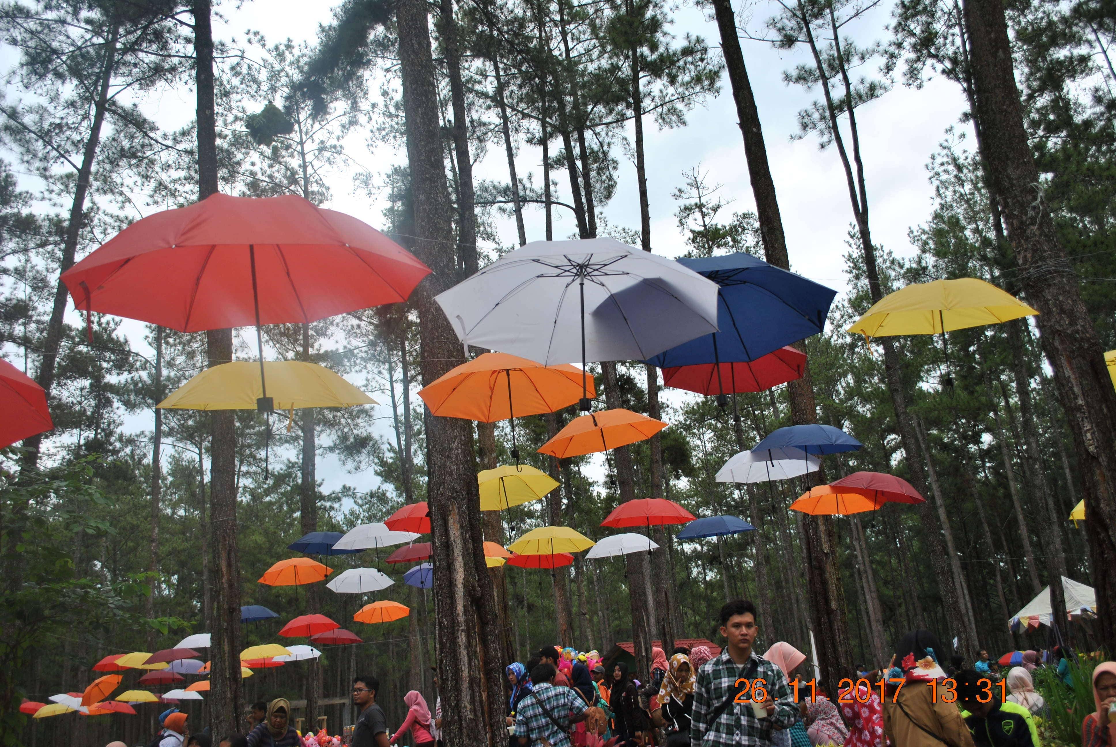 Kemit Forest Destinasi Wisata Terletak Cilacap Education Desa Karang Gedang
