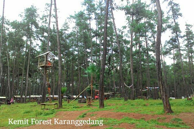 Kemit Forest Karanggedang Jelajah Hutan Kermit Kab Cilacap