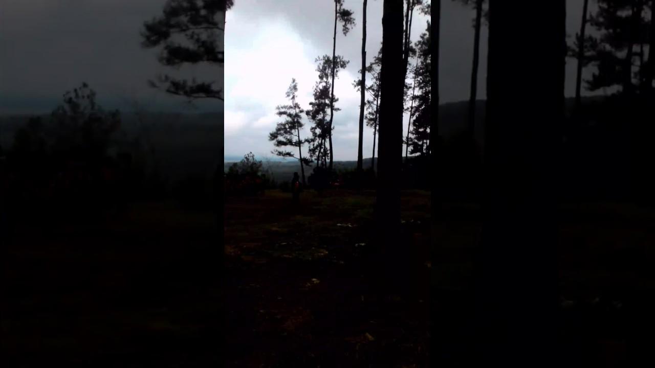 Kemit Forest Karanggedang Sidareja Cilacap Tewel Youtube Hutan Kermit Kab