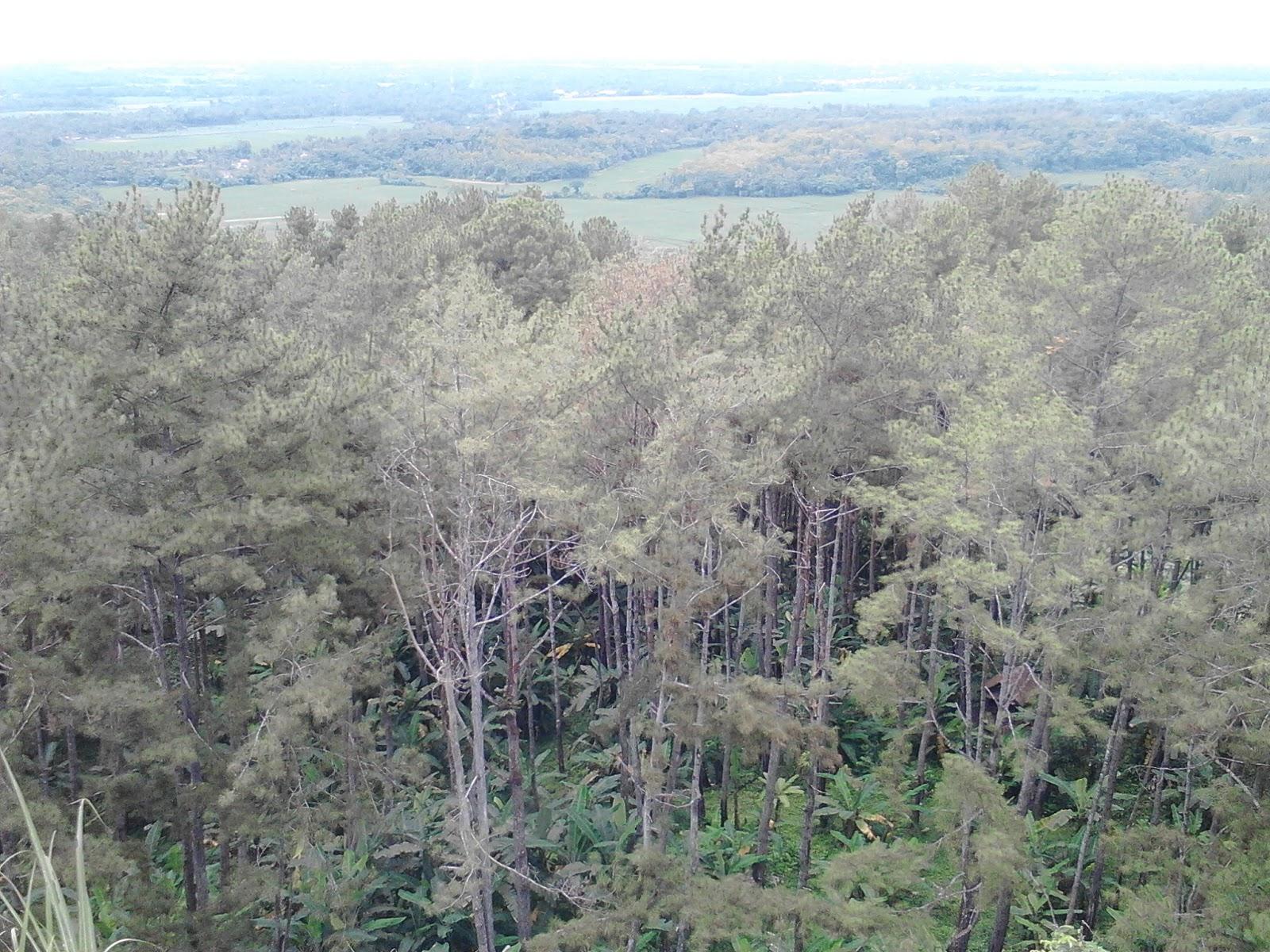 Kemit Forest Karanggedang Sidareja Destinasi Wisata Alam Hutan Kermit Kab