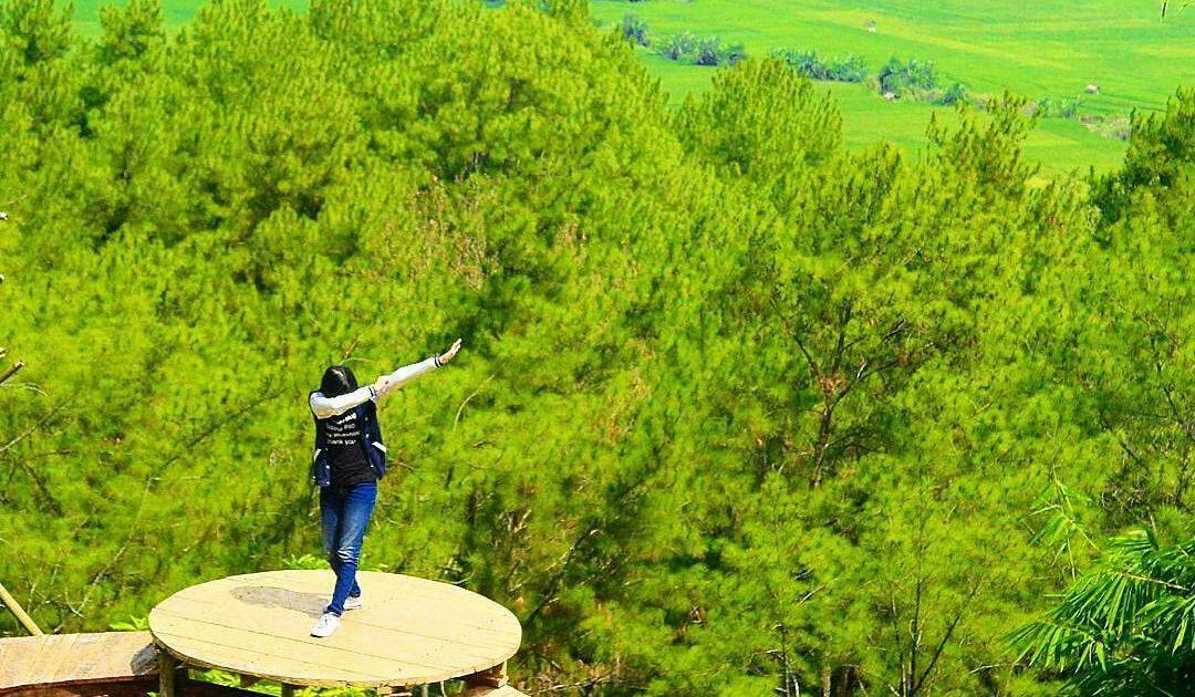Perkenalkan Hutan Kemit Destinasi Hits Kekinian Cilacap Spot Fotonya Keren