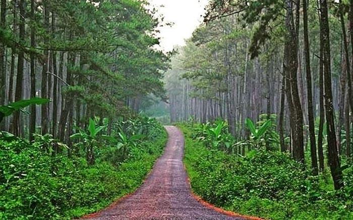 Wisata Hutan Pinus Karanggedang Cilacap Jawa Tengah Kunci Julangadeg Semacam