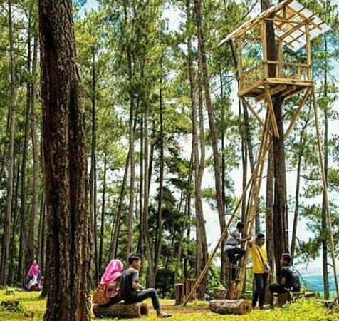 Wisata Hutan Pinus Karanggedang Cilacap Jawa Tengah Lokasi Alami Kermit