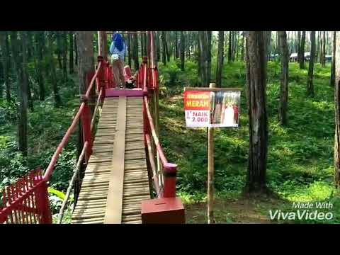 Wisata Terhots Dicilacap Kemit Forest Natural Sidareja Karanggedang Hutan Kermit