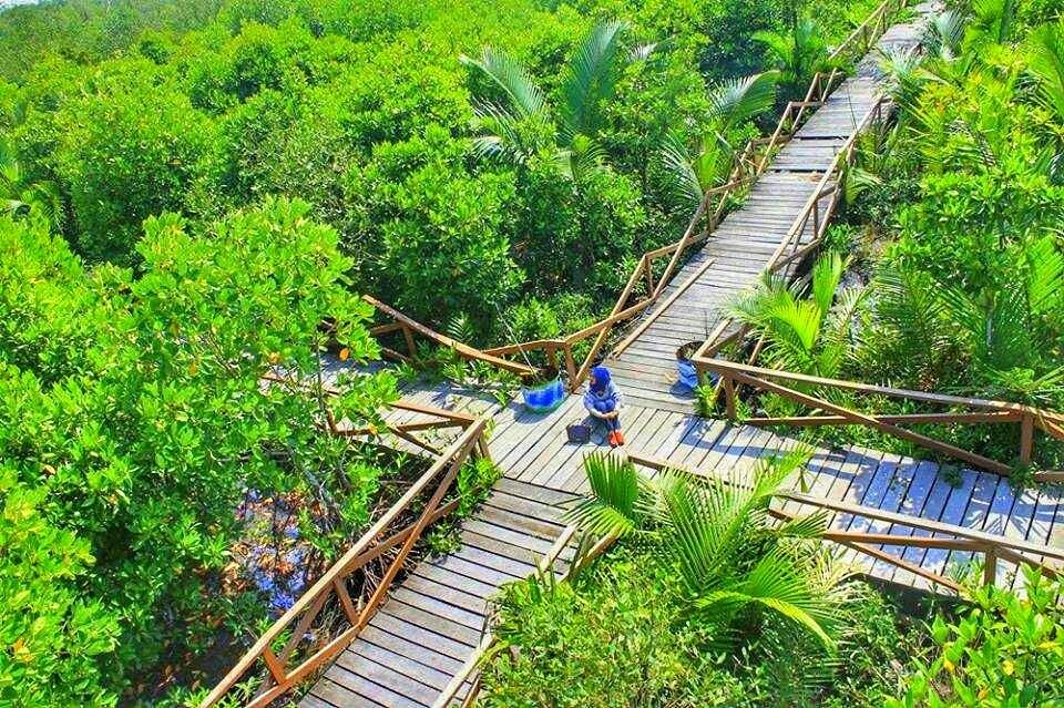 Hutan Mangrove Kampung Laut Kabupaten Cilacap Cilacapkerenid Kab