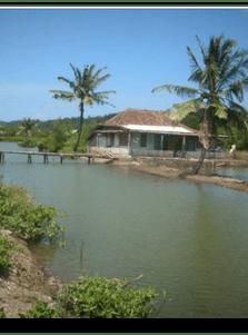 Klaces Jadi Desa Wisata Diskominfo Kab Cilacap Kecamatan Kampung Laut