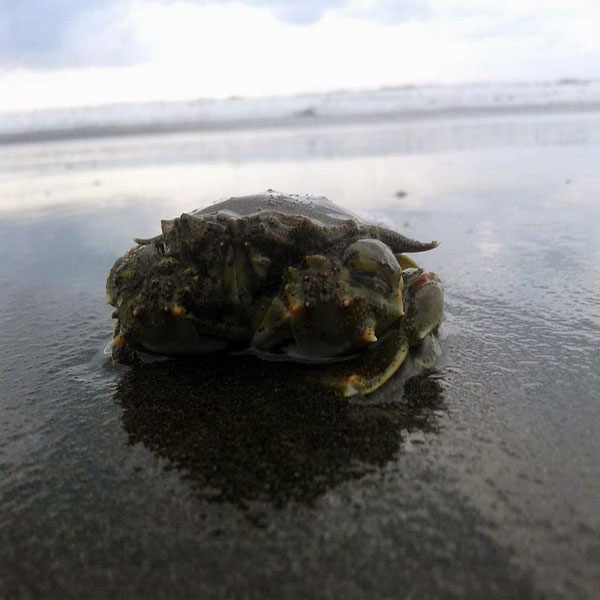 Pantai Widarapayung Indah Timur Cilacap Lihat Id Binatang Kab