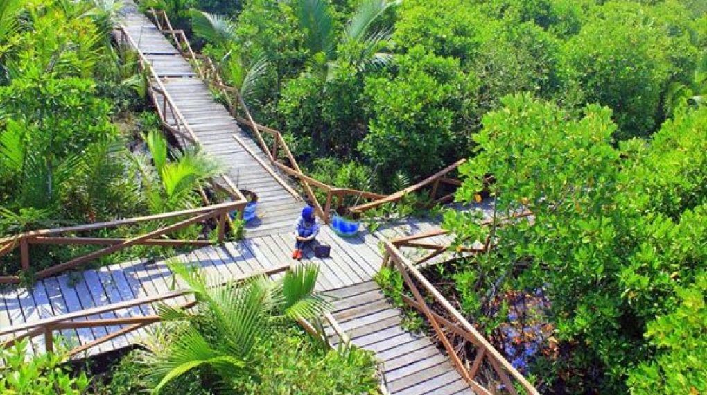 Tempat Wisata Cilacap Terindah Direkomendasikan 3 Kampung Laut Waterpark Tirta