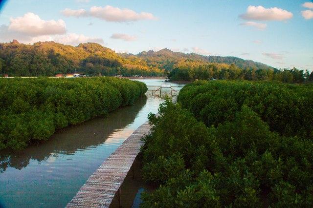 2017 Page 19 Hutan Mangrove Ayah Kebumen Wisata Payau Kab
