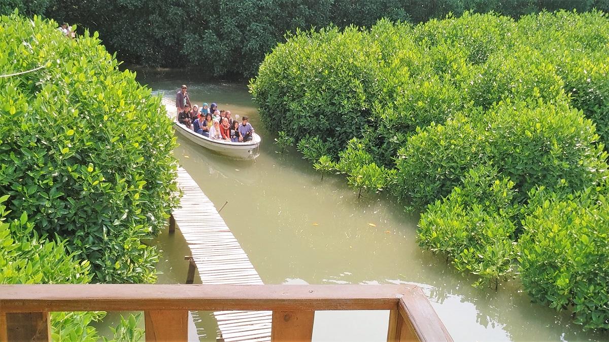 30 Pemandangan Cantik Hutan Mangrove Ayah Kebumen Infokebumen Asyiknya Naik