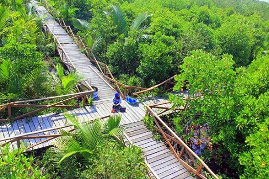 7 Obyek Wisata Cilacap Kunjungi Wisatawan Dinas Hutan Payau Mangrove