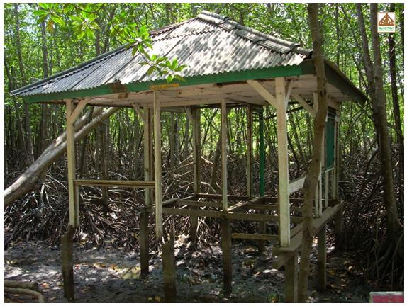 Beginilah Kondisi Mangrove Karangtalun Tritih Kulon Cilacap Ganis Riyan Efendi