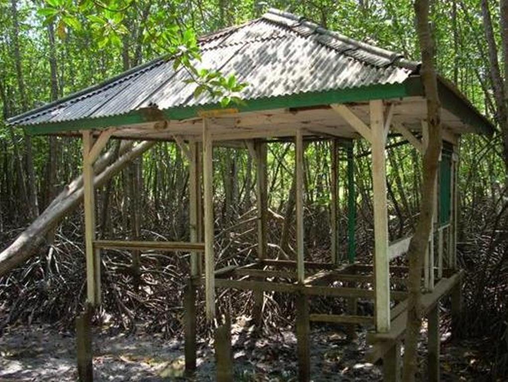 Beginilah Kondisi Mangrove Karangtalun Tritih Kulon Cilacap Lokasi Hutan Payau