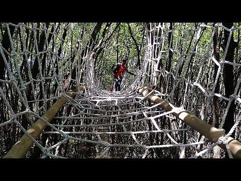 Berpetualang Wisata Hutan Mangrove Cilacap Youtube Payau Kab