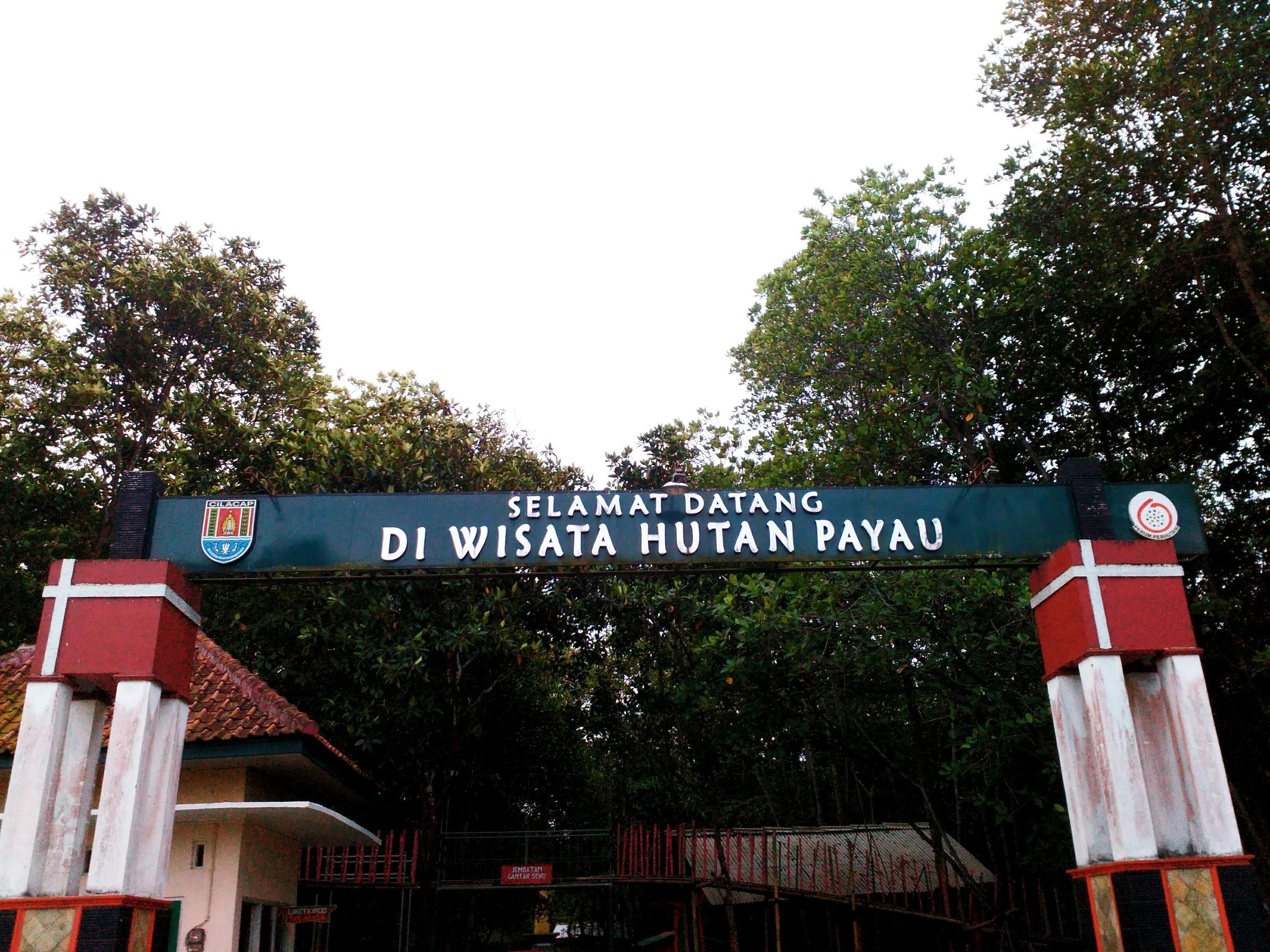 Cilacap 1 Menyelusuri Wisata Hutan Payau Steemit 1990 Salah Satu