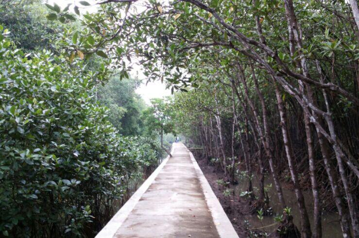 Hutan Mangrove Karang Talun Cilacap Jalan Beton Https Www Kompasiana