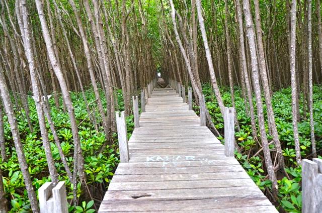 Hutan Mangrove Mongabay Id Wisata Payau Kab Cilacap
